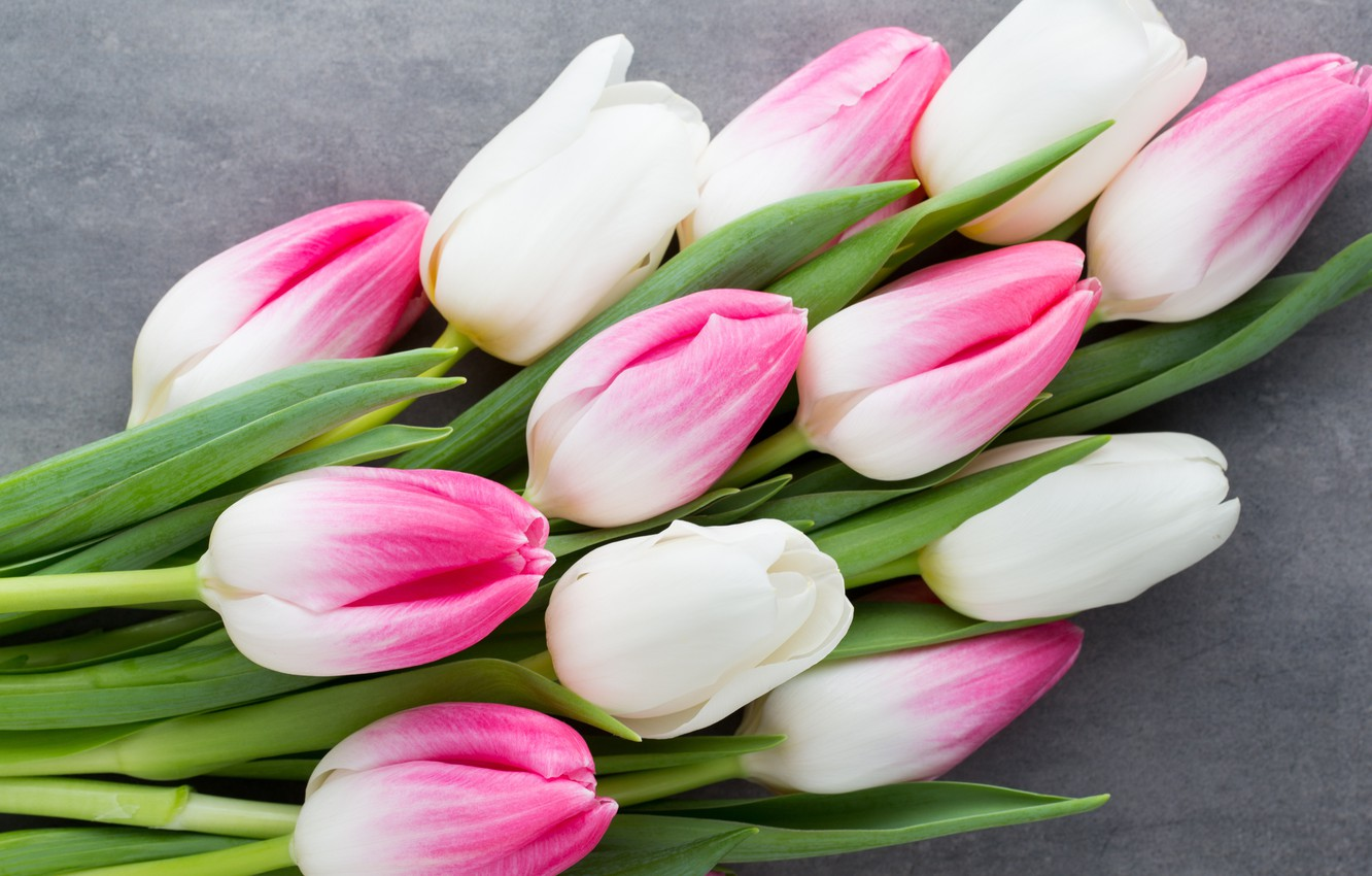 Photo wallpaper flowers, bouquet, tulips, pink, white, white, fresh, pink, flowers, beautiful, tulips, spring