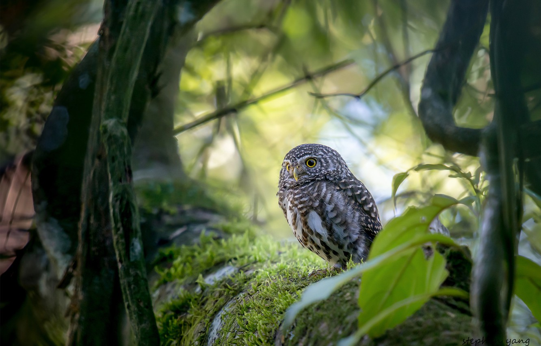 Photo wallpaper trees, bird, owl