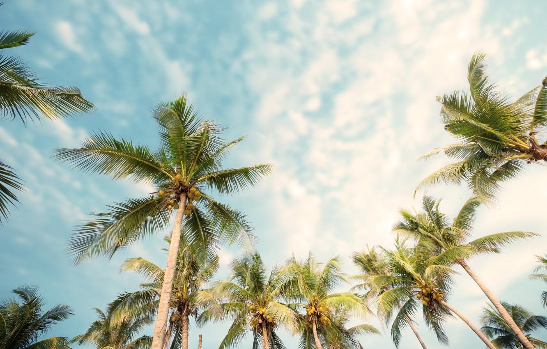 Photo wallpaper beach, summer, palm trees, summer, beach, beautiful, paradise, palms, tropical