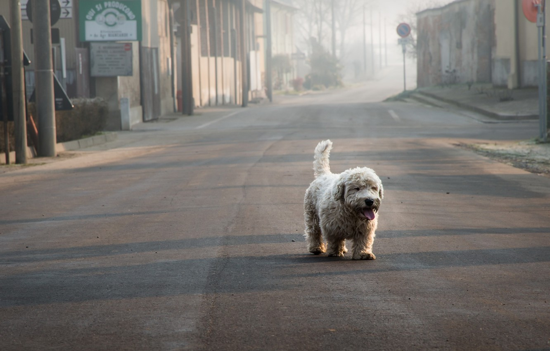 Photo wallpaper loneliness, street, dog