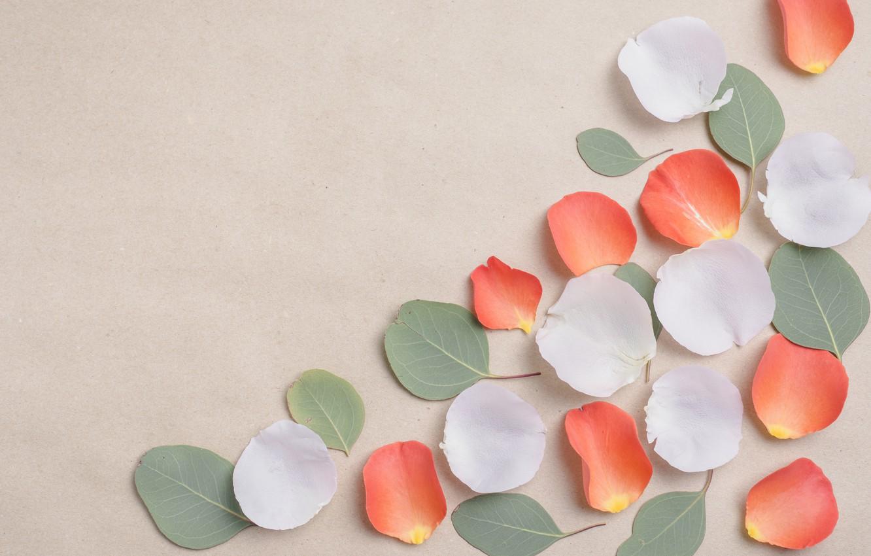 Photo wallpaper flowers, background, rose, petals