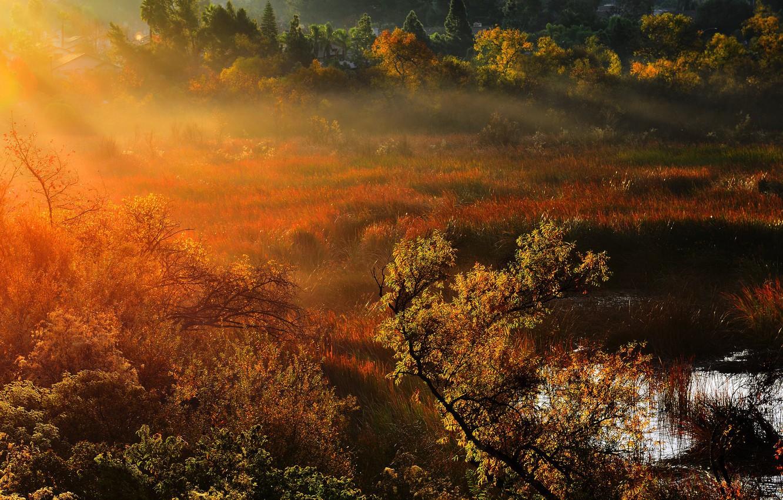 Photo wallpaper nature, morning, rays of light