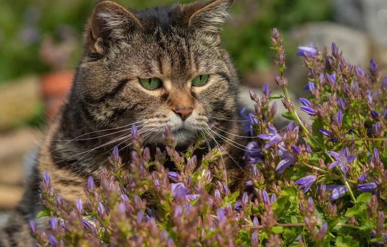 Photo wallpaper cat, flowers, face, Kote, kotofeich