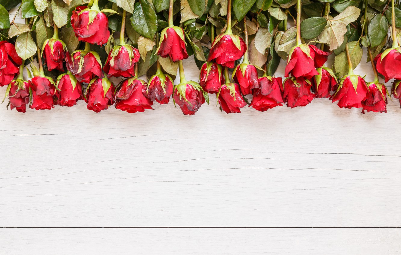 Photo wallpaper flowers, roses, bouquet, red, red, buds, wood, flowers, romantic, roses, bud