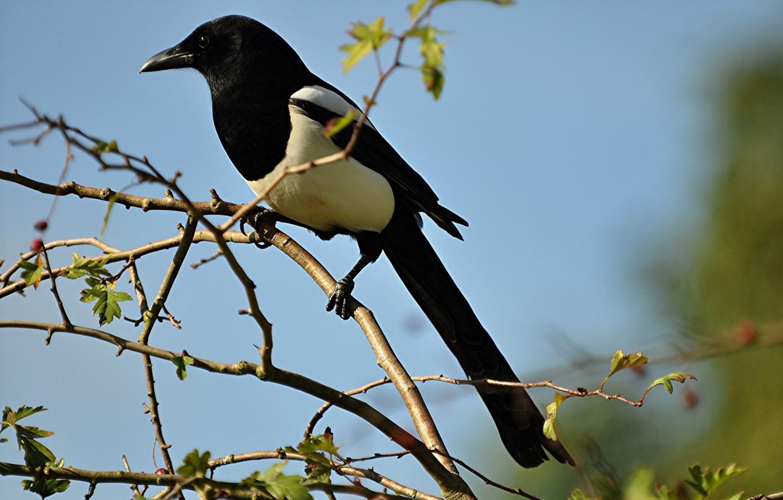 Photo wallpaper bird, branch, beak, tail, forty