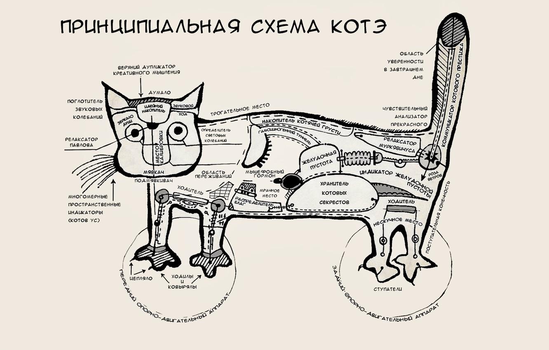 Photo wallpaper cat, mood, humor, scheme, Kote