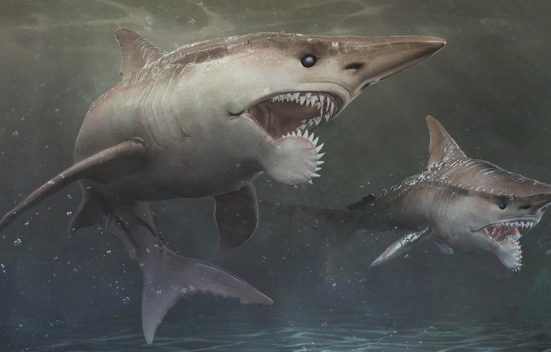 Photo wallpaper teeth, Depth, Shark, Mako, Skin, teeth, Mako, Depth, by Shake It Off, Helicoprion