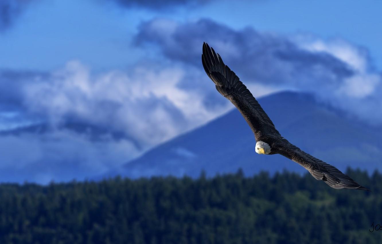 Photo wallpaper height, wings, power, flight, bald eagle, the scope, bird of prey