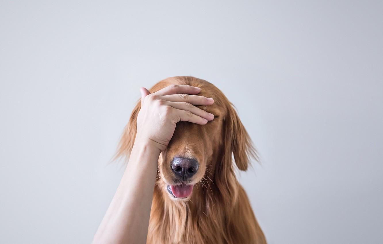 Photo wallpaper face, background, hand, dog, rukalitso