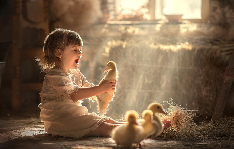 Photo wallpaper joy, hay, girl, ducklings