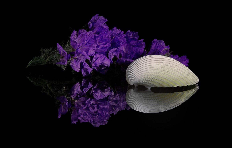 Photo wallpaper flowers, reflection, shell