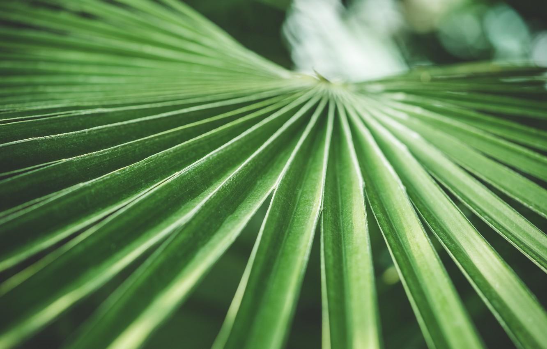 Photo wallpaper leaves, Palma, green