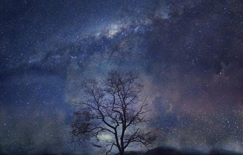 Photo wallpaper night, tree, stars