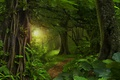 Picture jungle, the sun, Jungle, greens, path, leaves, trees, forest.tropics