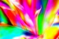 Picture line, pattern, background, petals, fractal, paint, flame