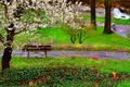 Picture Park, Grass, Grass, Flowering, Park, Spring, Nature, Bench, Flowering, Nature, Spring, River, River