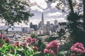 Picture flowers, the city, grey, pink, megapolis
