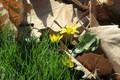 Picture leaves, macro, flowers, April, spring 2018, meduzanol ©