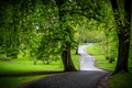 Picture chestnuts, greens, Park, trees, road