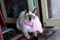 Picture scarf, scarf, face, pink, blue-eyed, I knew a cat she always came out the window, ...