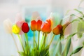 Picture tulips, color, flowers