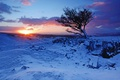 Picture winter, snow, mountains, sunrise, tree, dawn, England, England, Wales, Wales, Brecon Beacons National Park, National ...