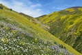 Picture USA, CA, grass, the sky, gorge, mountains, slope, flowers, Carrizo Plain