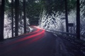 Picture excerpt, forest, snow, light, road