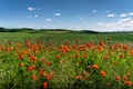 Picture clouds, the sky, the sun, Maki, greens, red, field, flowers