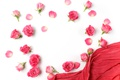 Picture romantic, roses, buds, roses, flowers, pink