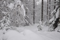 Picture Winter, Snow, Forest, Frost, Winter, Frost, Snow, Forest