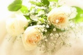 Picture roses, gypsophila, tenderness