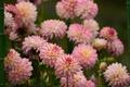 Picture color, beauty, petals, flowering, dahlias
