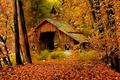 Picture Fall, Art, Art, Figure, Autumn, Autumn
