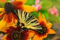 Picture Butterfly, Flowers, Flowers, Macro, Macro, Butterfly