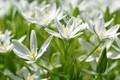 Picture flower, macro, flowers, nature, tenderness, beauty, plants, stamens, pistils, flora, awakening, white color, bulbous, snow ...