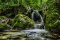 Picture moss, stream, waterfall, nature, forest, stones