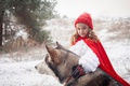 Picture tale, forest, collar, Little Red Riding Hood, fur, dog, husky, Grey Wolf, winter, cloak, snow, ...