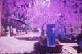 Picture auto, street, spring, Sakura