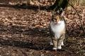 Picture nature, background, cat