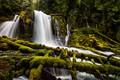 Picture forest, waterfall, moss, Oregon, cascade, Oregon, logs, Upper Downing Creek Falls