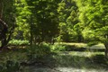 Picture forest, river, Odenwald