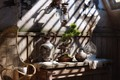 Picture light, furniture, plant, the room, GOOD MORNING