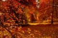 Picture autumn, forest, leaves, the sun, trees, branches, Park, yellow