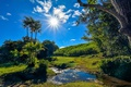 Picture greens, summer, grass, the sun, clouds, trees, stream, palm trees, France, the rays of the ...