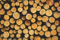 Picture forest, trees, background, tree, logs, bark, trees, nature, tree