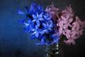 Picture light, flowers, background, dark, bouquet, Bank, pink, still life, blue, composition, hyacinths