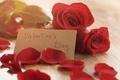 Picture bouquet, petals, red, romantic, Valentine's Day, gift, roses, red roses