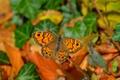 Picture Macro, Butterfly, Butterfly, Macro