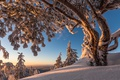 Picture winter, snow, trees, Finland, Finland, North Karelia, North Karelia, Koli national Park, Koli National Park